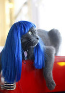 cat cute ilolled wig // 300x426 // 25.9KB