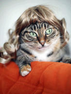 cat cute ilolled wig // 329x432 // 31.1KB
