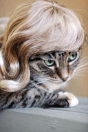 cat cute ilolled wig // 288x432 // 34.6KB