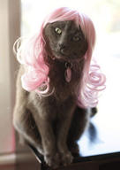 cat cute ilolled misha wig // 306x432 // 22.7KB