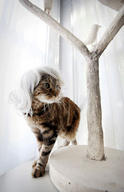 cat cute ilolled wig // 280x432 // 21.7KB