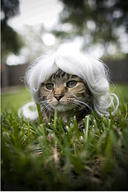 cat cute ilolled wig // 287x432 // 31.2KB