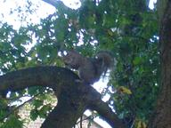 squirrel ukc // 1632x1224 // 271.4KB